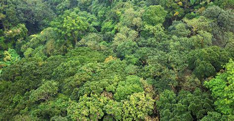 canap tress paper raises question of tropical forest carbon