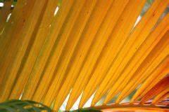 Kentia Palme Braune Blätter : kentia palme sch dlinge erkennen und bek mpfen ~ Watch28wear.com Haus und Dekorationen