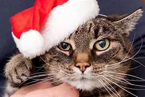 Verkleidung Für Katzen : adventskalender f r katzen lieblingskatze ~ Frokenaadalensverden.com Haus und Dekorationen