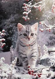 Funny Kitty Cat