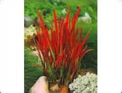Winterharte Pflanzen Für Balkonkästen : pflanzen kaufen balkonpflanzen zimmerpflanzen steingartenpflanzen ~ Orissabook.com Haus und Dekorationen