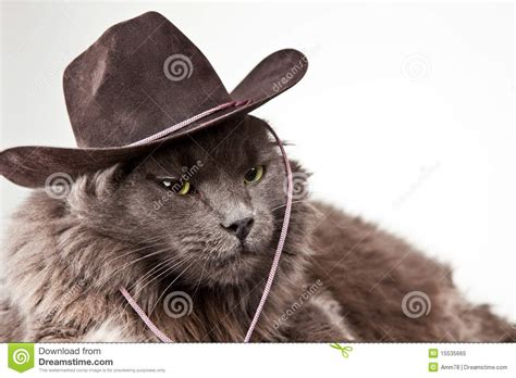 Cowboy Cat Royalty Free Stock Photo Image 15535665