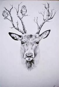 199 best DEER SKETCHES images on Pinterest | Deer sketch ...