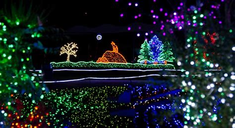 make sure you see the zoo lights zoocoupon org