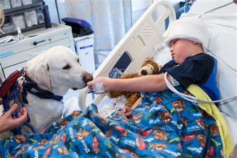 Uclas Hospital Therapy  Ee  Dogs Ee   Showcased In New Pbs Do Entary Grouchy Puppy Blog