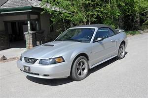 2001 convertible Mustang GT - Canadian Mustang Owners Club - Ford Mustang Forums