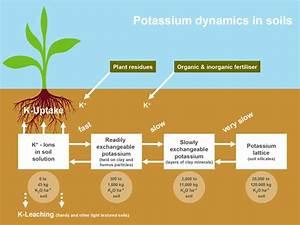 Potassium Cycle Part 1