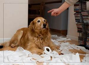 Dog Training: What To Do About Bad Behavior (Repost from ...