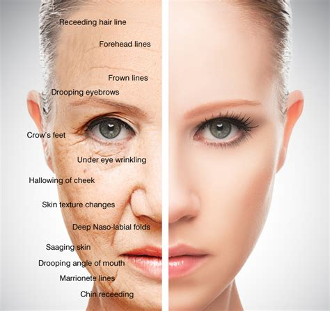 Signs Of Skin Ageing  Aevum Clinic In Blackrock Medical. Heat Injury Signs. Shadow Possession Jutsu Signs. Task Signs. Drawings Signs. Safety Information Signs. Colored Signs. Drinking Water Signs. Pediatric Stroke Signs