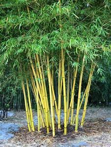 Quand Planter Lavande Dans Jardin : comment planter des bambous dans son jardin ~ Dode.kayakingforconservation.com Idées de Décoration