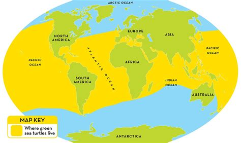 What Does Geographic Location by Green Sea Turtle Facts For National Geographic