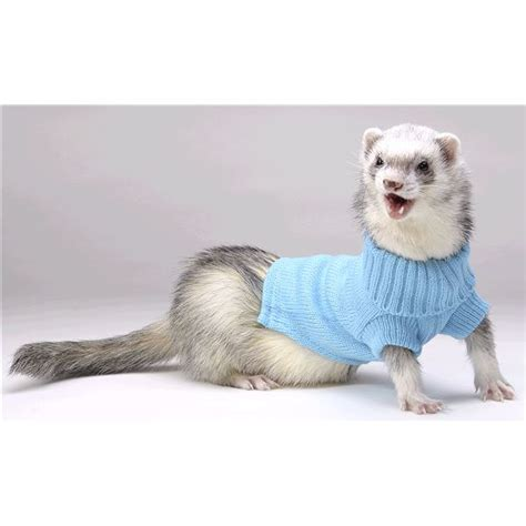 ferret sweaters ferrets in sweaters 24 images 17 best images about