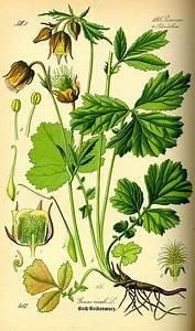 Pflanzenlexikon Mit Bild : pflanzenlexikon mit bild table basse relevable ~ Orissabook.com Haus und Dekorationen