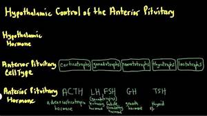 Schneid Guide To Hypothalamic Control Of The Anterior
