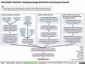 Hemolytic Anemia  Pathophysiology