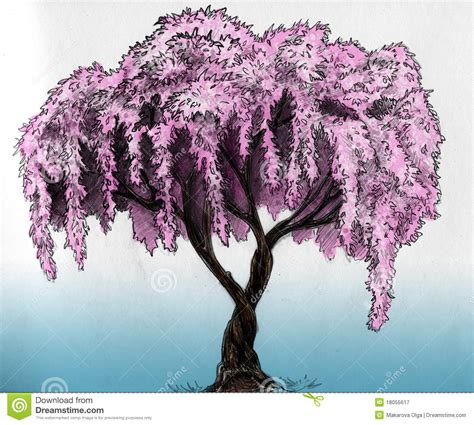 Cherry Blossom Tree Drawing Amazing Wallpapers