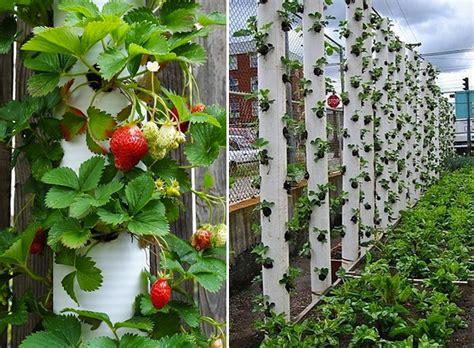 Vertical Gardening Strawberries by 12 Diy Vertical Strawberry Garden Ideas