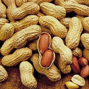 Champs Jumbo Virginia Peanuts   Gurney's Seed & Nursery Co.