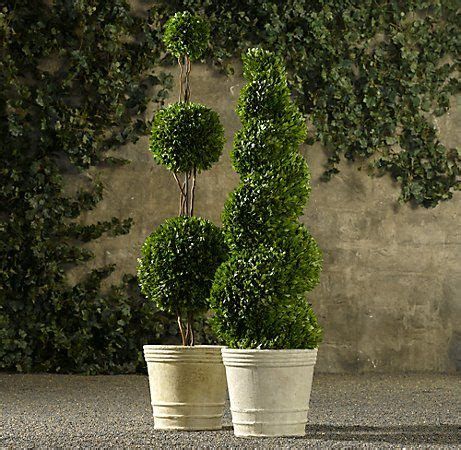 boxwood topiary trees 258 best images about container gardens on 1773