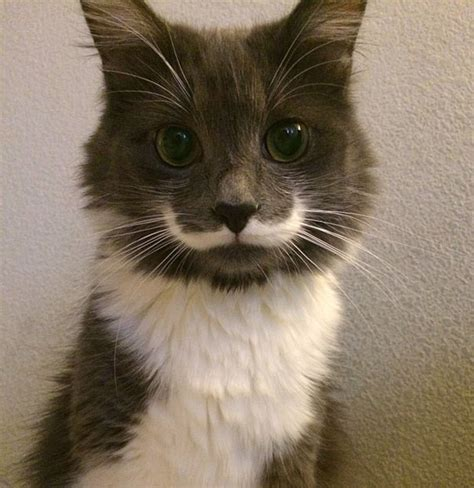 25 Animals Famous For Their Unusual Fur Markings  Bored Panda