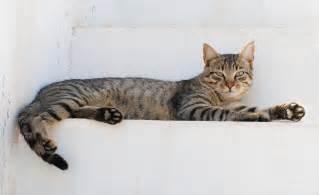 cat cat file cat august 2010 4 jpg wikimedia commons