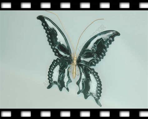 China Wrought Iron Butterfly (ia12)  China Wrought Iron