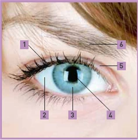 Trillend ooglid oorzaken symptomen en behandeling