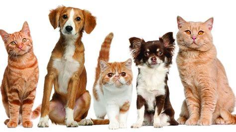 10 diferencias entre perros y gatos | elsalvador.com