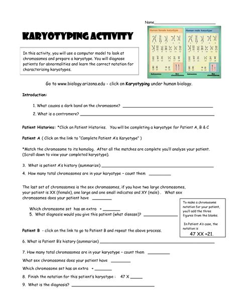 Karyotyping Activity Doc  Teaching Stuff  Pinterest  Activities, Genetics And Life Science