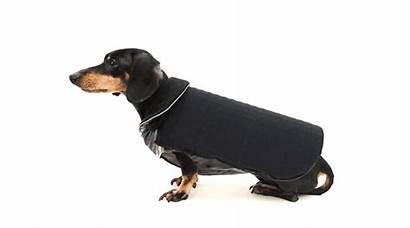 Dog Disco Led Cani Perros Ropa Necesaria