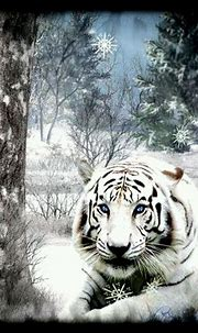 Beautiful White Tiger | Wild cats, Beautiful cats, Unusual ...