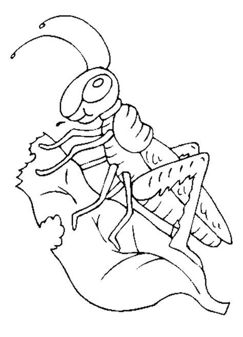grasshopper coloring pages  kids preschool