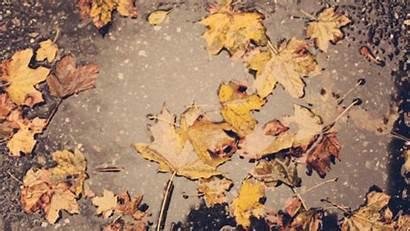 Leaves Fall Lovethispic