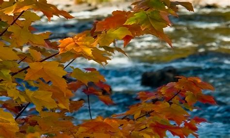 Autumn Themed Wallpapers For Android by Free Autumn Wallpapers Appstore For Android