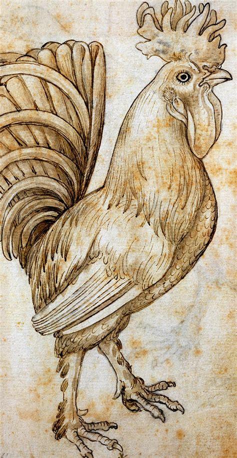 rooster drawing  leonardo da vinci