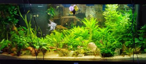 sol nutritif pour aquarium planter un aquarium sans sol nutritif page 2