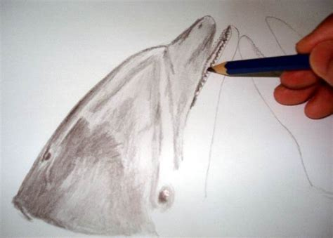 realistic dolphin drawings  graphite pencil