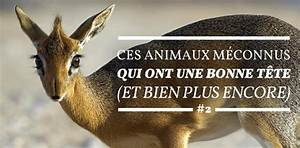 Masturbation Au Volant : la vie secr te des animaux ~ Medecine-chirurgie-esthetiques.com Avis de Voitures