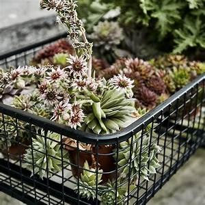 Plantes D Hiver Extérieur Balcon : quelles plantes choisir pour un balcon l 39 hiver marie ~ Nature-et-papiers.com Idées de Décoration
