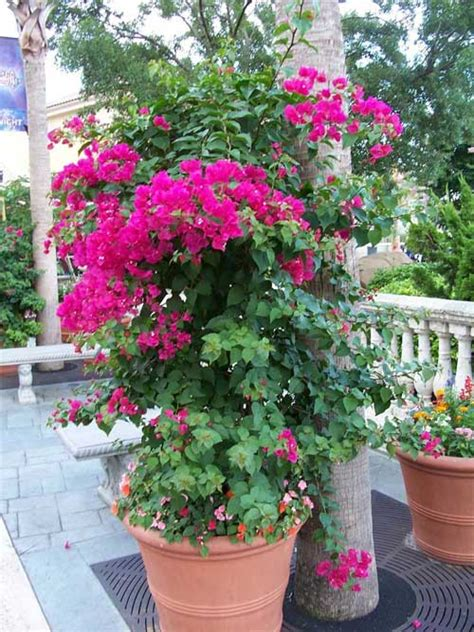 outdoor potted plants sun outdoor gardening in pots potting outdoor plants the 10 best plants for full sun