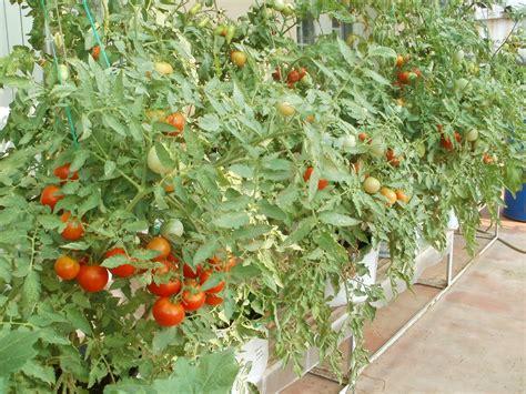 vegetable garden    terrace vegetable garden