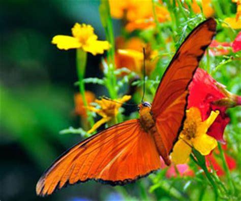 fun facts  butterflies  kids