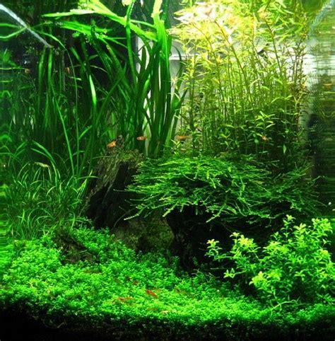 Nano Aquascapes by Nano Aquascapes Aquascaping Aquarium