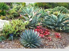 Agaves and Aloes at the South Coast Botanic Garden Miss