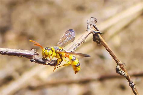 Američan sa necháva štípať a hrýzť jedovatým hmyzom - Emefka