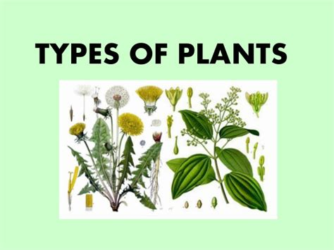 types of plants types of plants