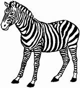 Zebra Coloring Pages Animals Clipart Safari Print Standing Wildlife African Clip Panda Awesome Library Popular sketch template