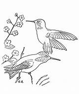 Hummingbird Coloring Pages Printable Flower Bird Hummingbirds Birds Colibri Traceable Template Simple Monkey Winter Animal Popular Getcoloringpages Sketch Library Clipart sketch template