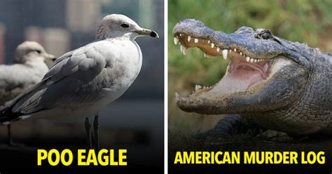The Internet Renamed 15 Animals and We're Literally DYING