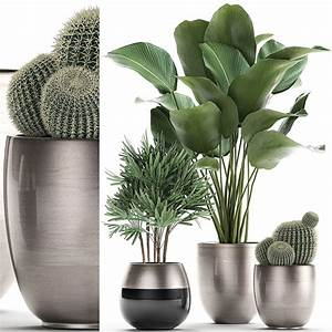 3d, decorative, plants, in, a, pot, for, the, interior, 688